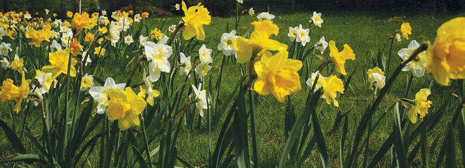 Heerlijk comfort in de vrolijke lente - Hotel Vianen