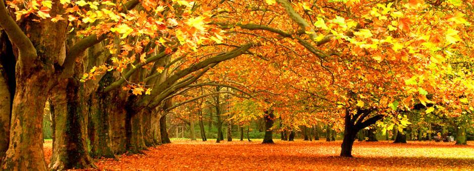 *Heerlijke herfst in Zwolle* - Hotel Zwolle