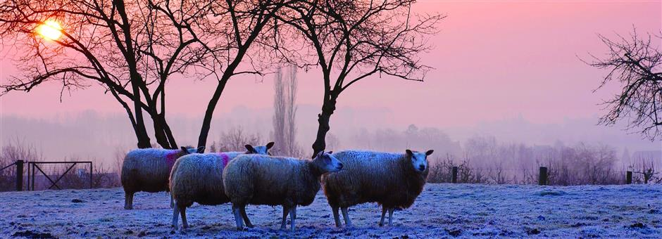 Winterdeal  2/3-daags arrangement incl. overnachting & ontbijt - Valk Exclusief