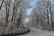 Winterspecial Nootdorp