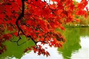 Herrlicher Herbst Arrangement