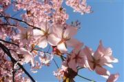 3- oder 4-tägiges Arrangement Frohes Frühjahr