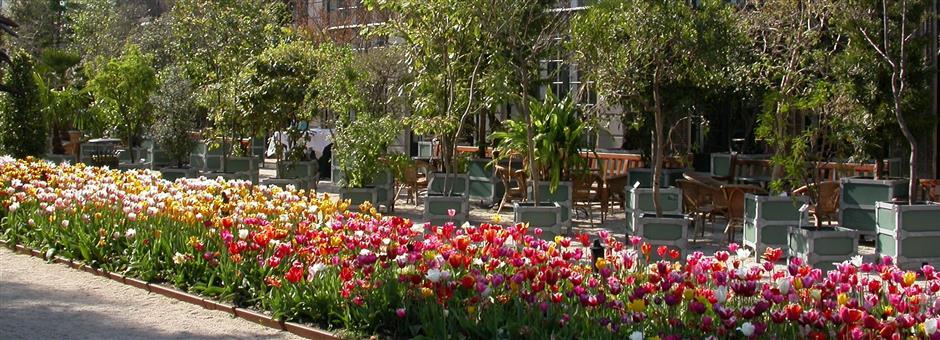 Hortus Botanicus - Hotel Leiden