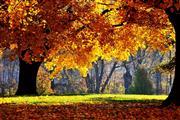 Heerlijk Herfst Arrangement