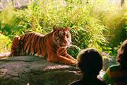 Experience the Rotterdam Blijdorp zoo