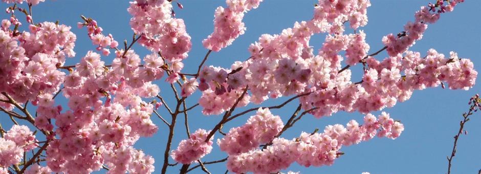 Vrolijk Voorjaar!  - Hotel Spier-Dwingeloo