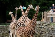 Zoo package - Hotel Assen