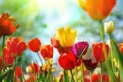 Vrolijk Voorjaars arrangement