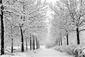 Winter deal