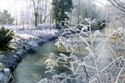 Hartje Winter Arrangement